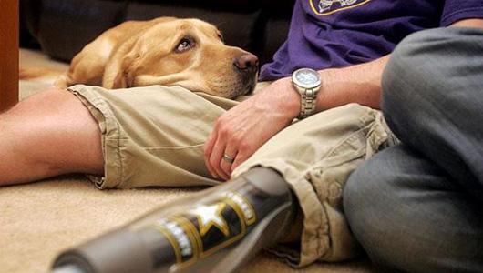 army dogs leg