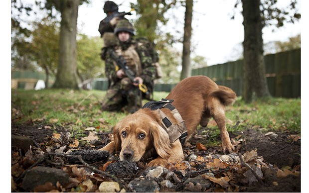 army sniffer dogs