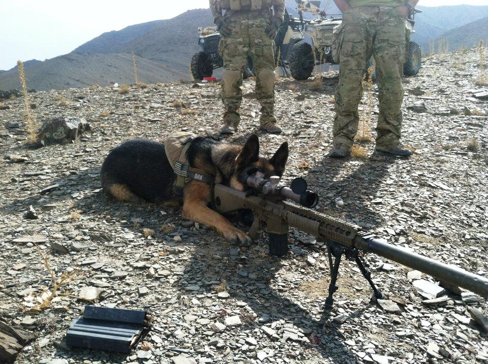 sniper dog army
