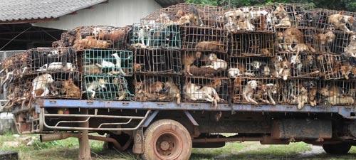 dog trafficking