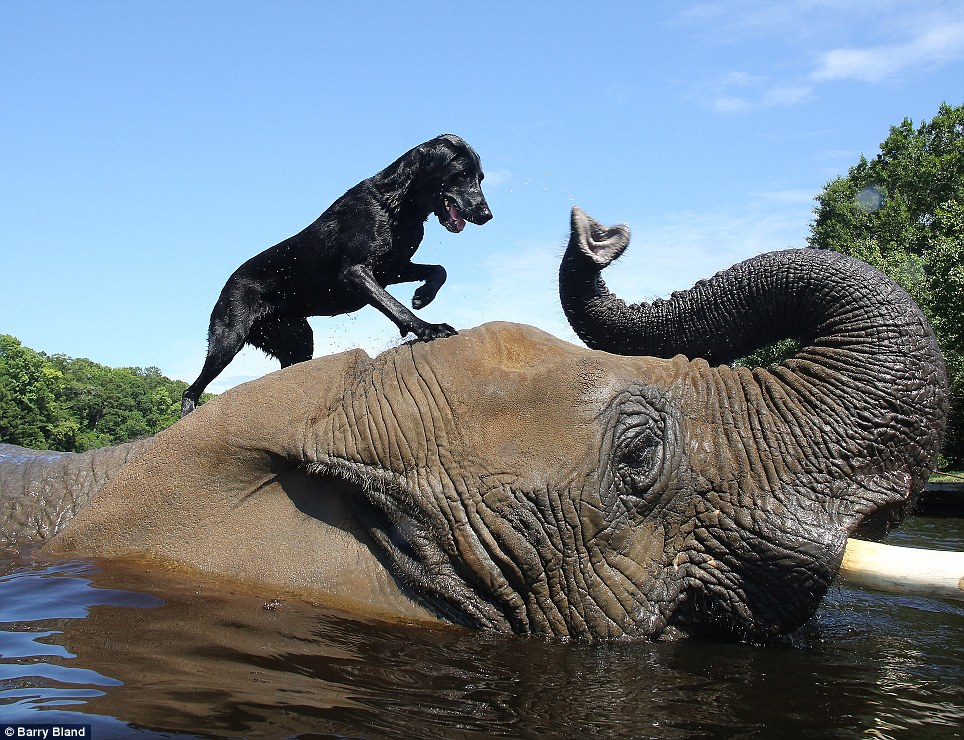 elephant and dog best friends