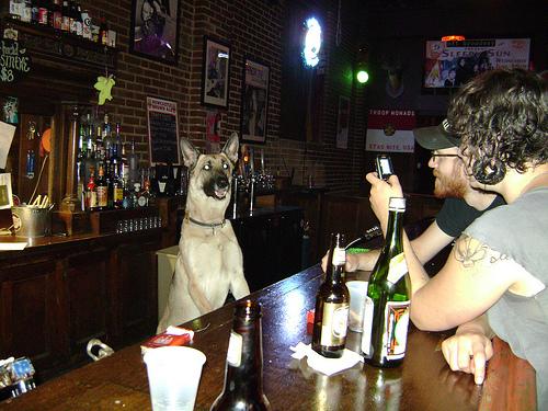 partydog4