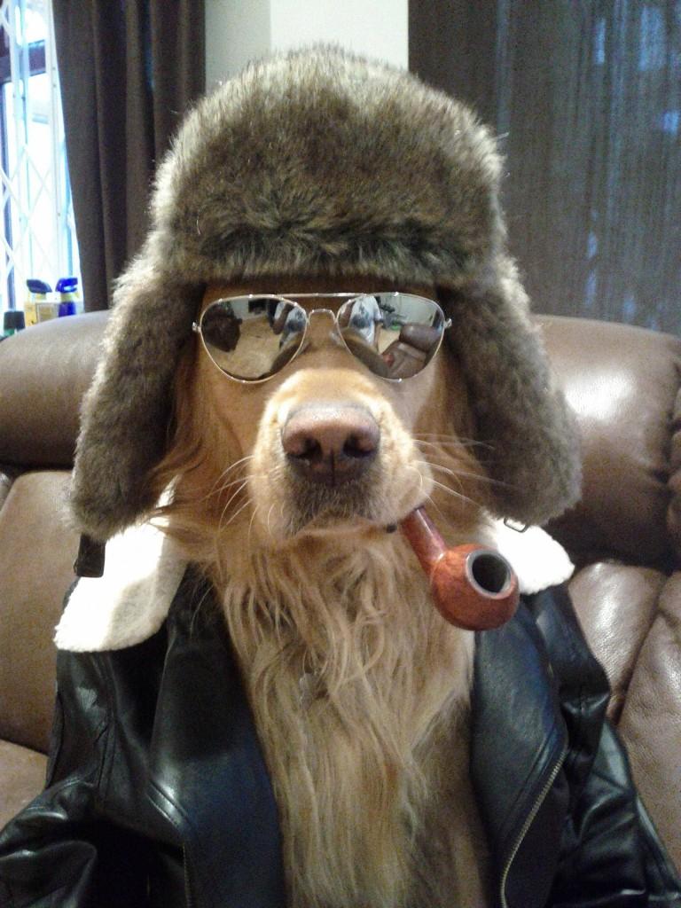 partydog6