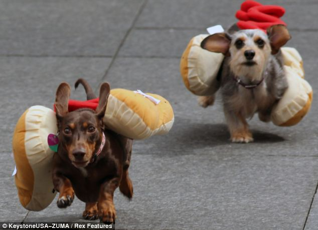 hotdog7