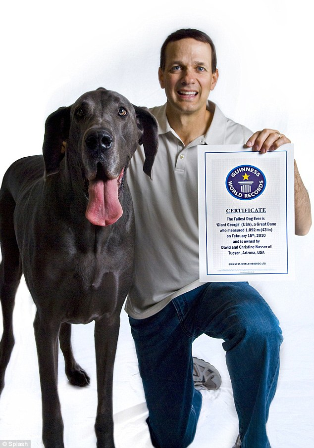 worlds tallest dog giant george passes away 8