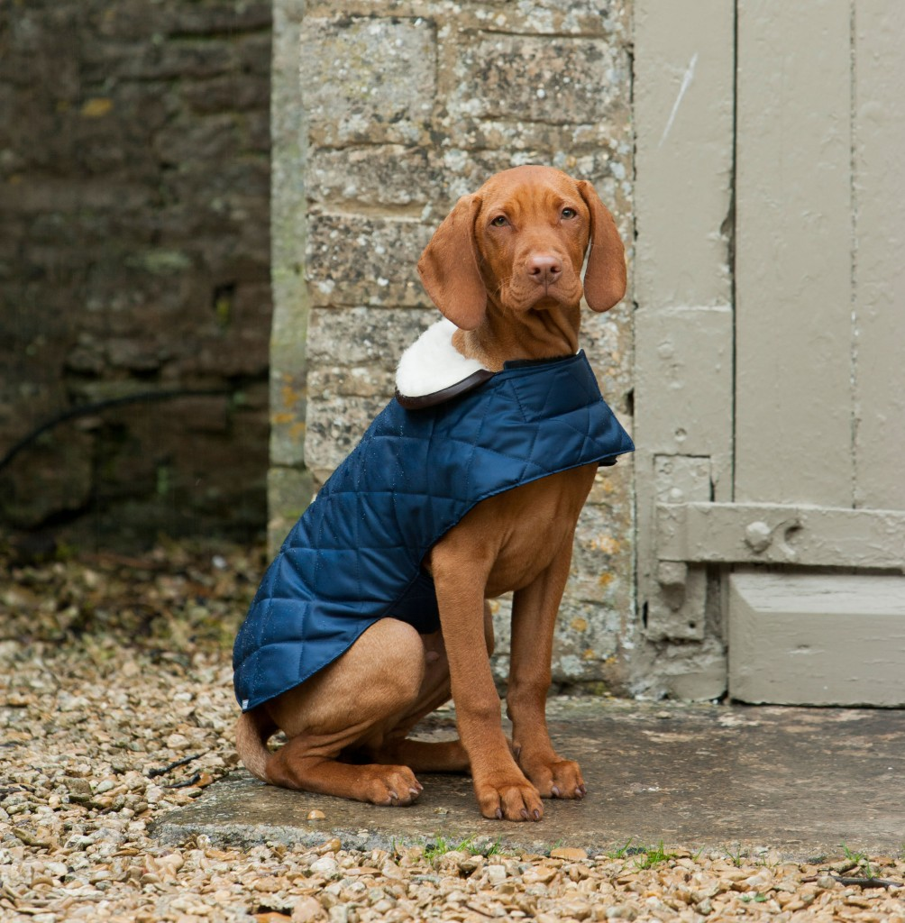 Mutts and Hounds Coat Quilted Navy
