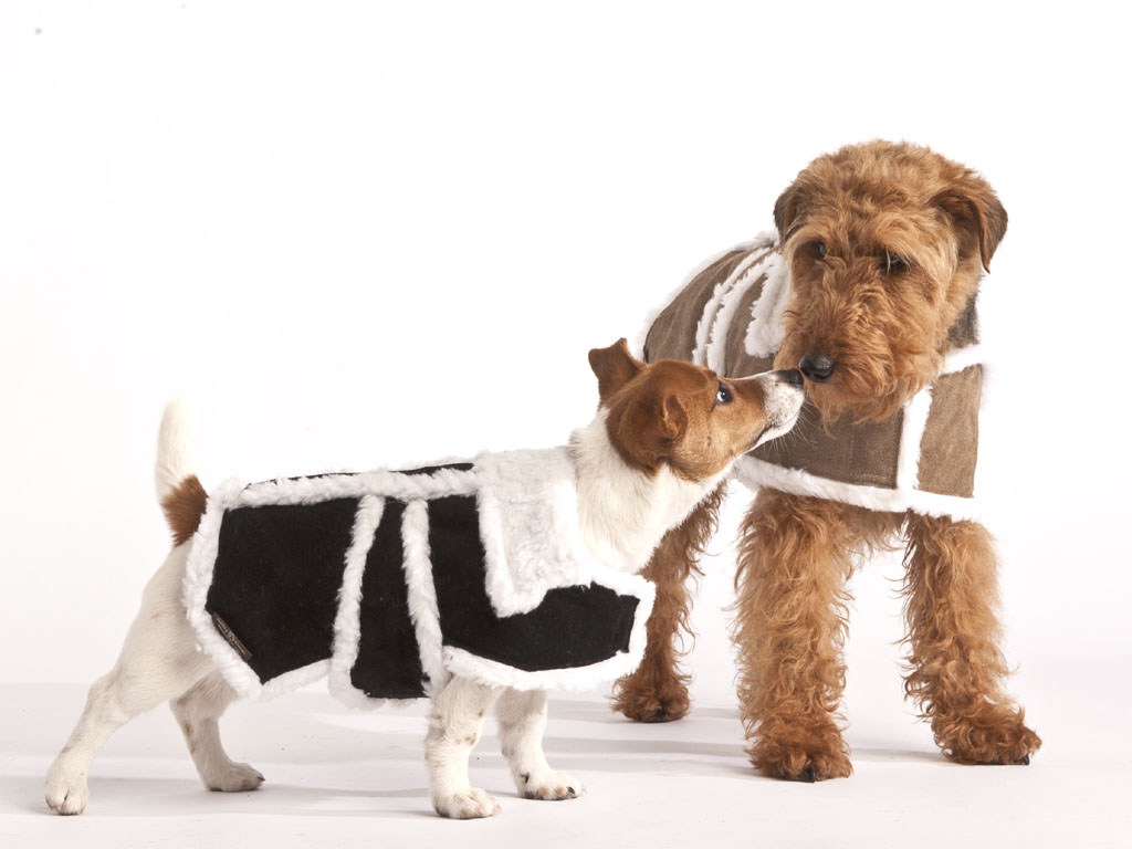 Dogs Designer Clothes Uk