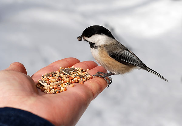 feed the birds in winter