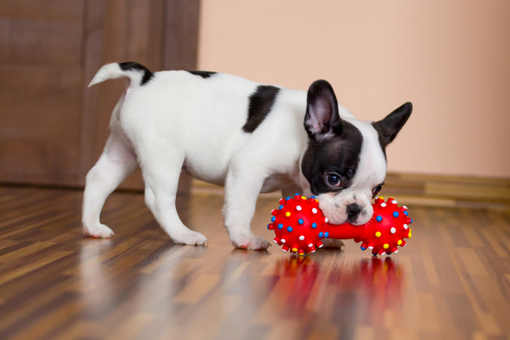 8 Simple Rules for Housebreaking Your New Puppy
