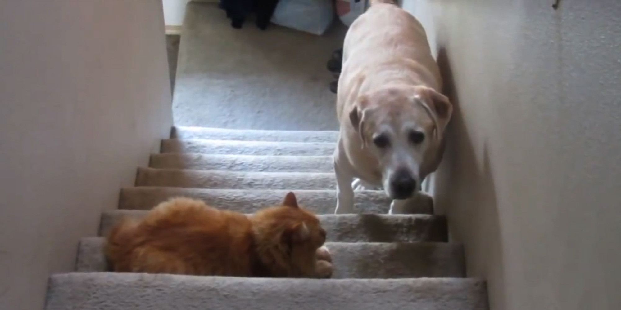 Dog Scared Of Cat On Stairs
