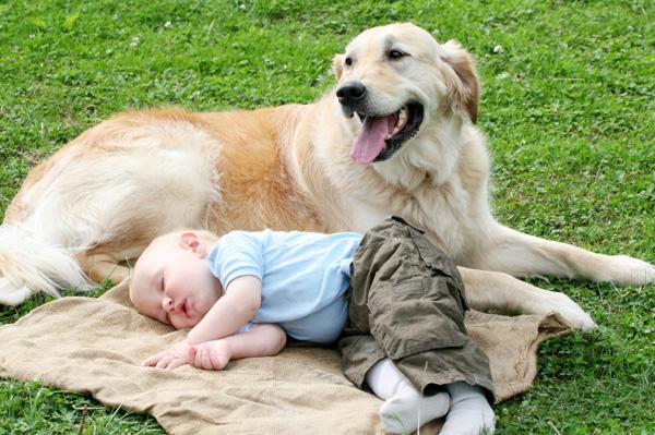 babydog