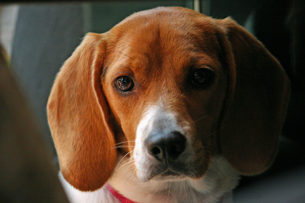 Top 10 Dog Breeds For Young Families