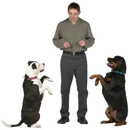 dog training timeframe