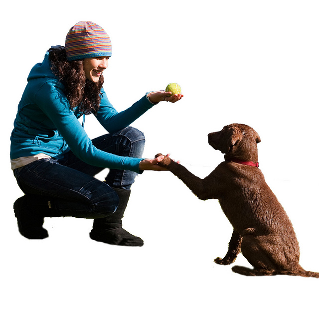 dog training session frequency