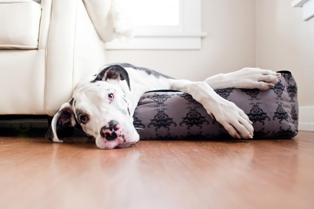 P.L.A.Y Designer Dog Beds