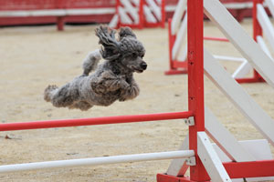 Different-Kinds-of-Dog-Training
