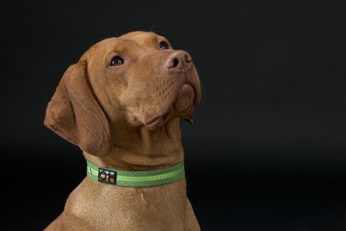 Oscar and Hooch Signature Dog Collar Apple Green lifestyle