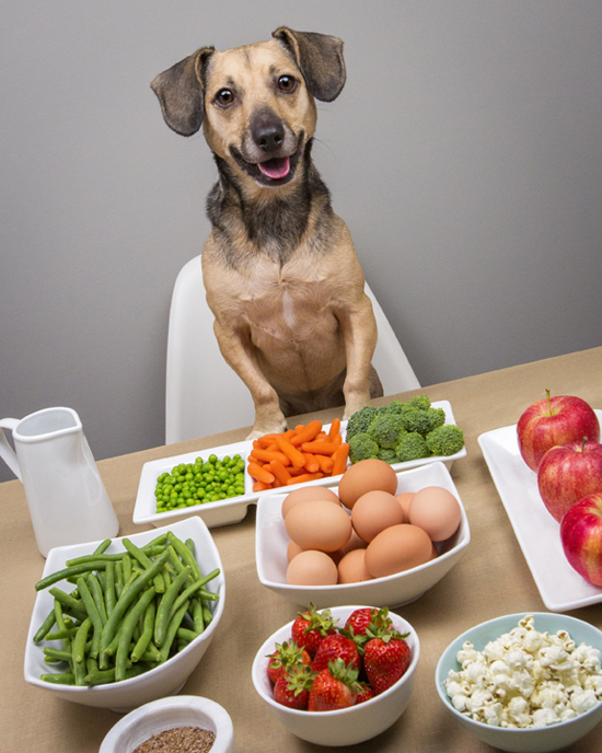 dog friendly food 1