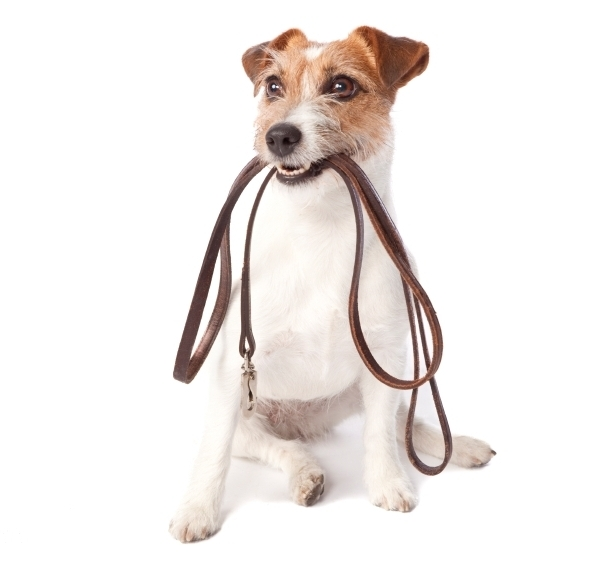 dog leash laws
