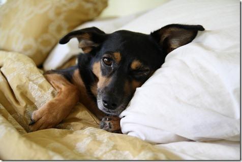 Should I Let My Dog Sleep On My Bed