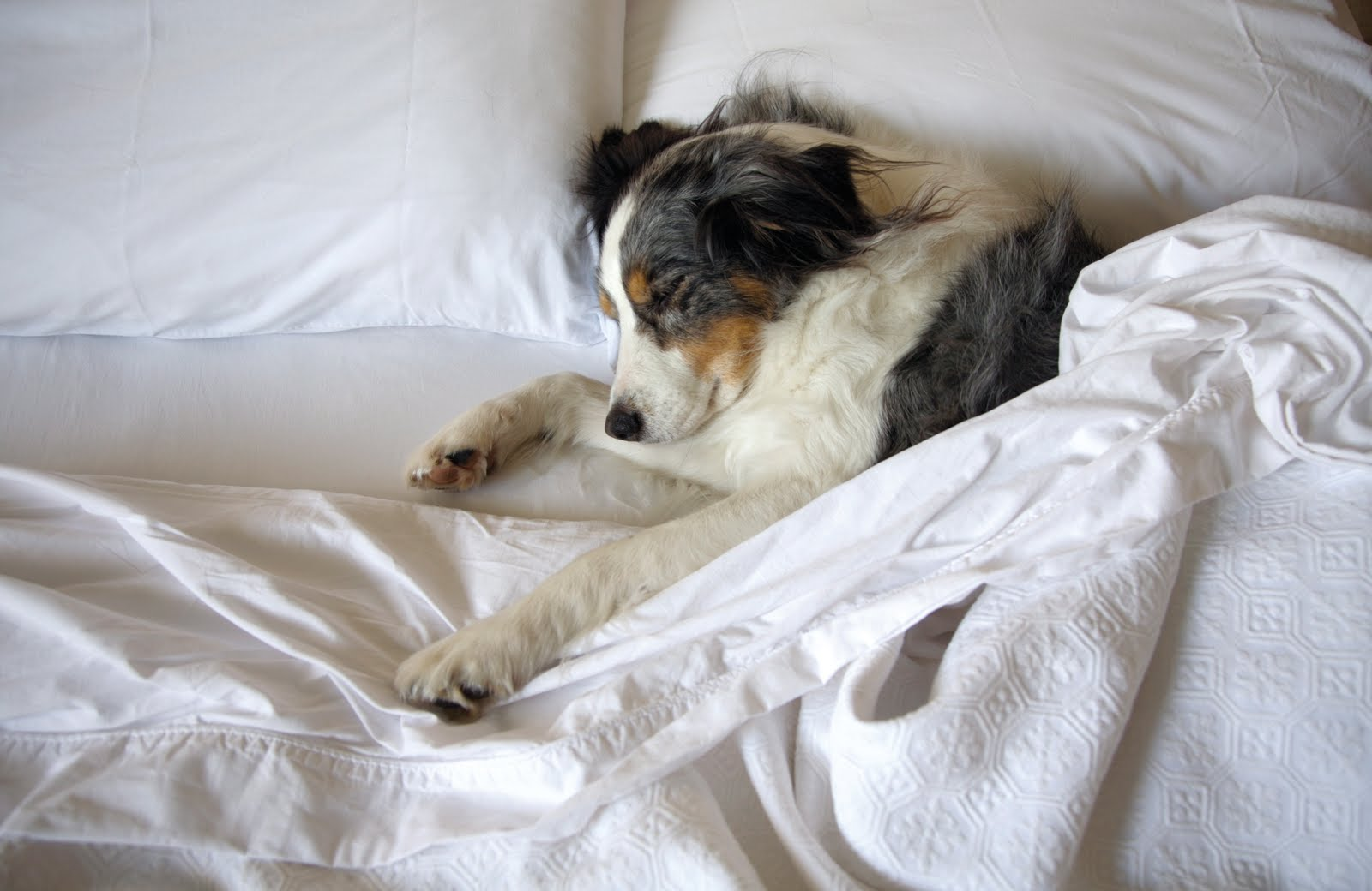 How To Establish A Sleeping Routine For Your Dog
