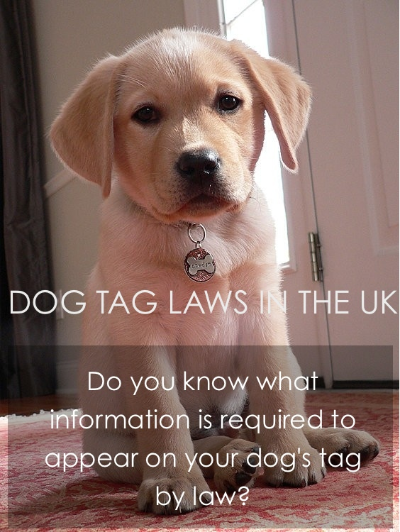 dog tag laws uk
