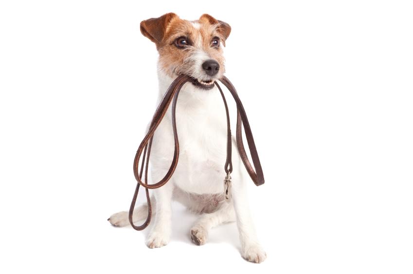 dog walkin 1