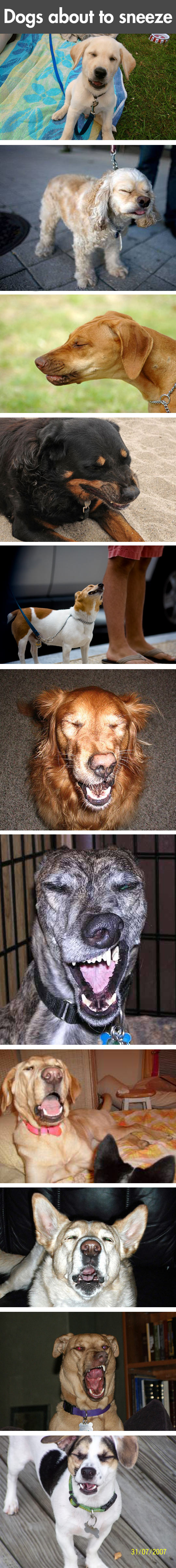 funny-dogs-sneeze-photo-cute