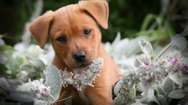 Can Dogs Eat Flowers