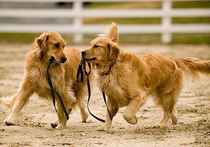 2nd dog 2