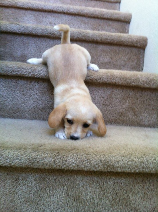 Is your dog clumsy? Top 10 most accident-prone dogs