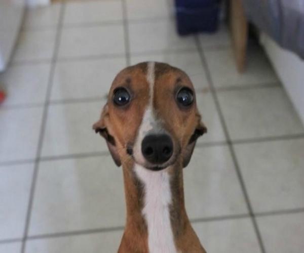dog selfie 1