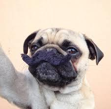 dog selfie 4