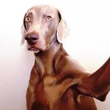 dog selfie 5