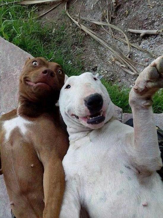 dog selfie 6