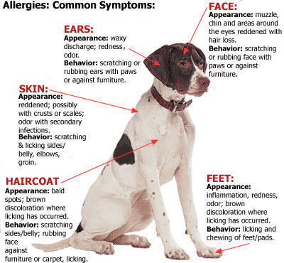 Canine Allergies 101