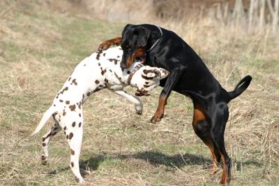 how to calm a hyperactive dog