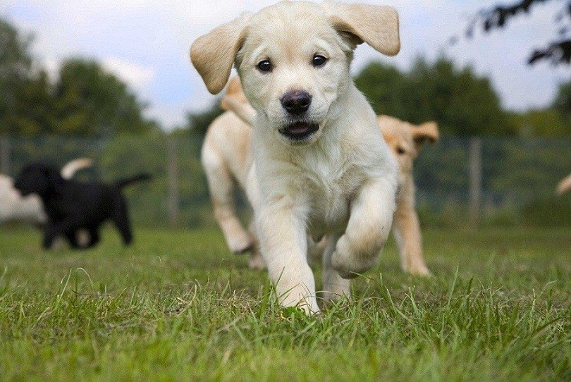Training Leads For Dogs Australia