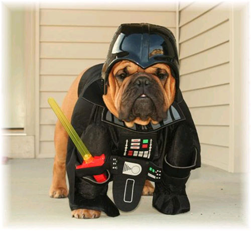 May The 4th Be With You Dog: May The Fourth Be Woof You