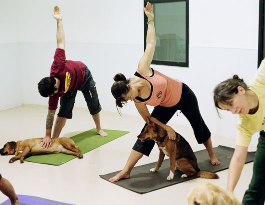 DOGA Practicing Yoga With Your Dog