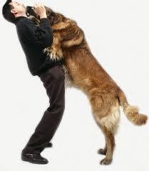 dog jumping 1