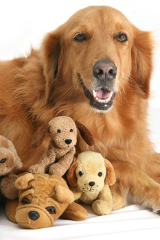 Best Types Of Dog Toys | Keeping Your Dog Happy With Toys
