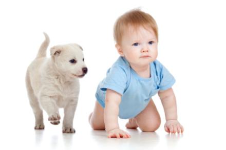 dog baby 1