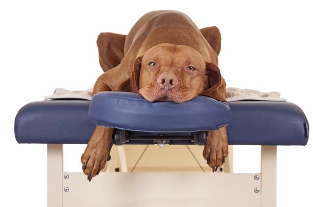 dog massage therapy