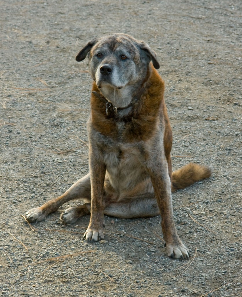 10 Ways To Help Your Dog With Arthritis