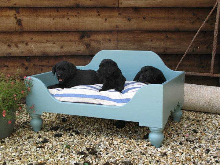 Luxury Raised Wooden Raised Dog Beds