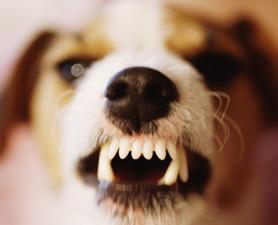dog-growl-communication-675553-