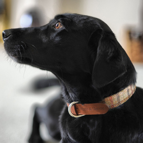 Balmoral Tweed and Leather Collars for Labradors