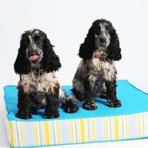 Lords & Labradors Two-Tone Refreshers Memory Foam Dog Beds Blue and Beach