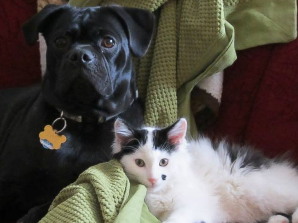 HT_dog_cat_friends_ml_140822_1_4x3_992